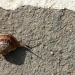 Τα σαλιγκάρια και η επιχειρηματική καινοτομία